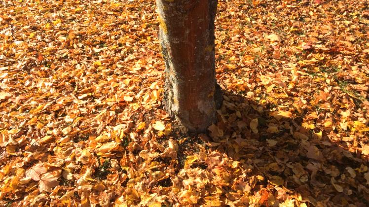 wort-des-monats-oktober